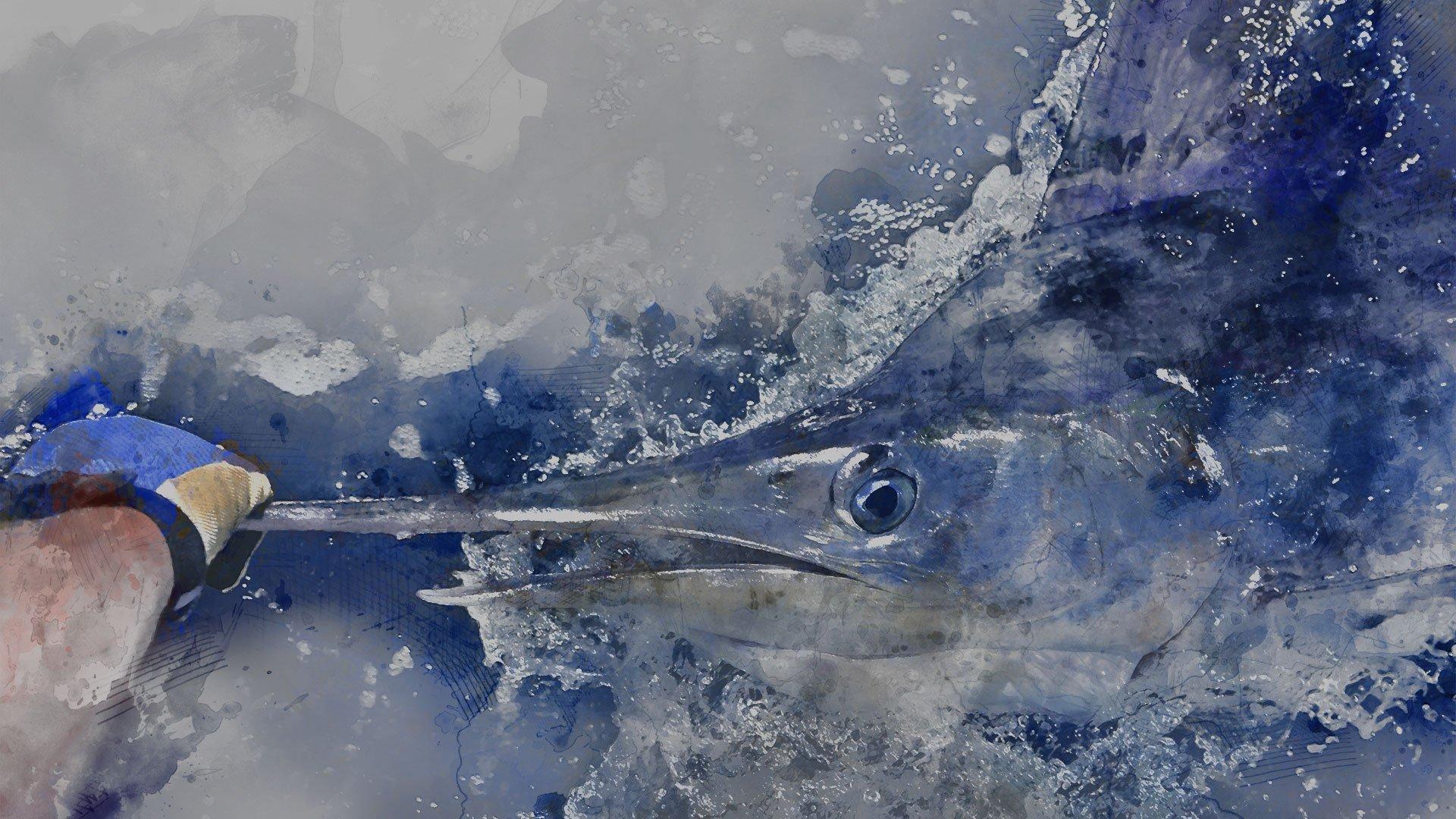 White Marlin Release